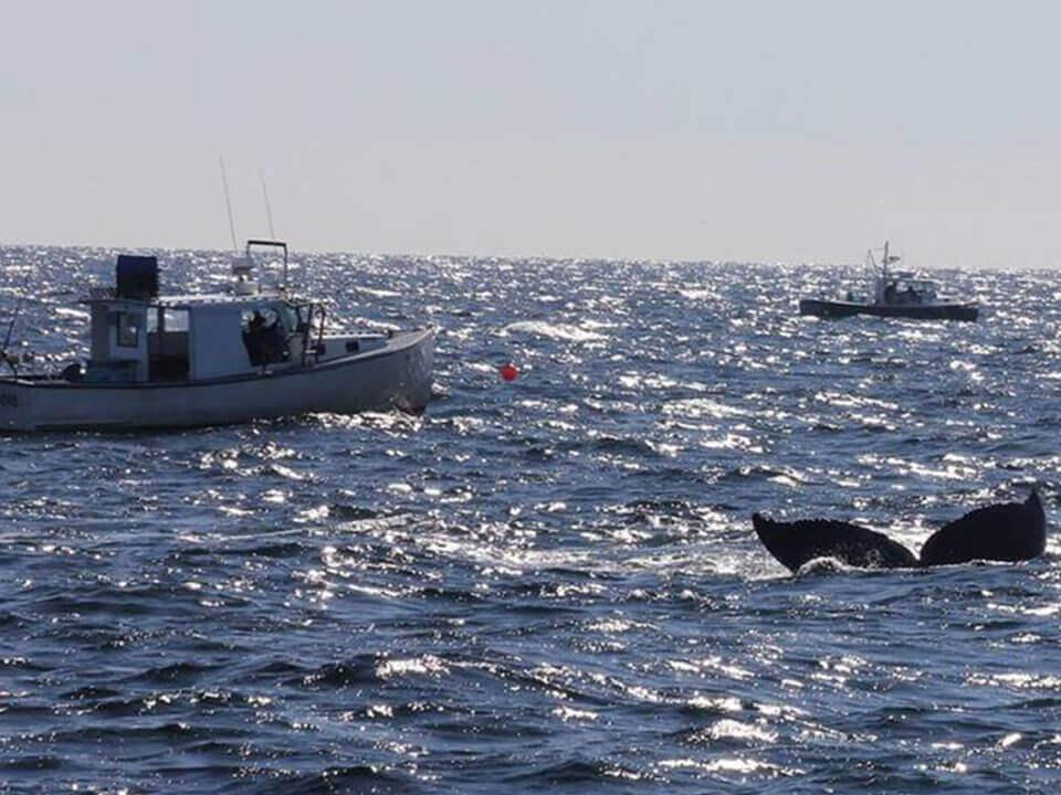 kraken tuna charter boat gloucester mass 4